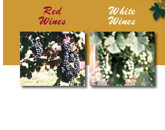 red and white wine images